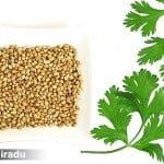 Un Fat-Frumos culinar: Coriandrul (Coriandrum sativum)