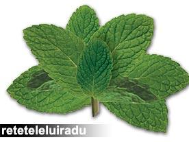 Menta (Mentha Spicata)