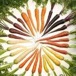 Morcovul, de la negru la portocaliu – partea 1