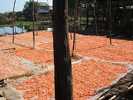 Creveti intinsi la uscat intr-un sat de pescari, pe lacul Ton Le Sap