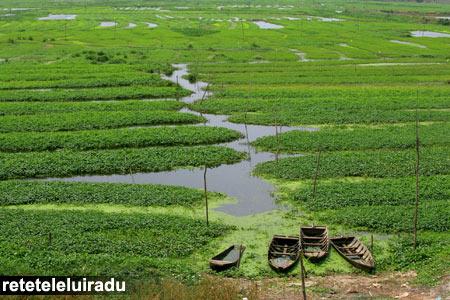 Plantatie de orez in Cambodgia