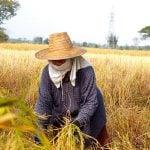 Secretul bucătăriei cambodgiene – partea 1