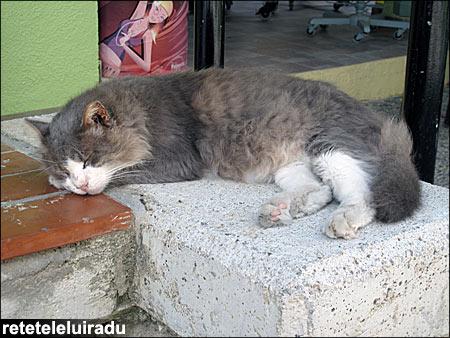 Pisici din Kos