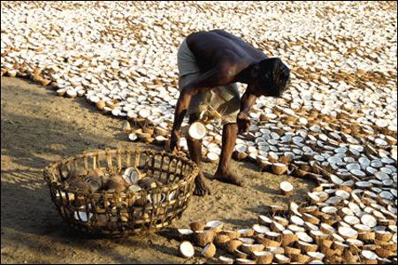 Copra intinsa la uscat. Sursa foto: http://www.merinews.com