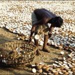 Pe scurt despre uleiul din nucă de cocos