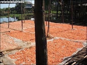 creveti Uscati Cambodgia1 - Fotografii de pe papamond (1) 3 - Retetele lui Radu