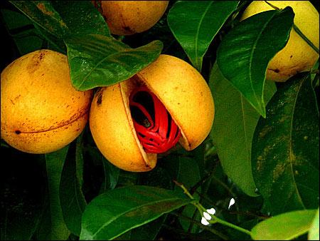 """nutmegFruit - Grenada - o bucătărie """"explozivă"""" (2) 1 - Retetele lui Radu"""