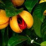 """Grenada – o bucătărie """"explozivă"""" (2)"""
