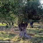 O săptămână în Zakynthos (3)