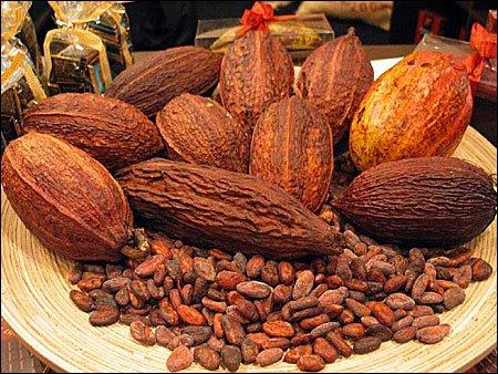 ciocolata06 - Pe scurt despre ciocolată (1) 6 - Retetele lui Radu