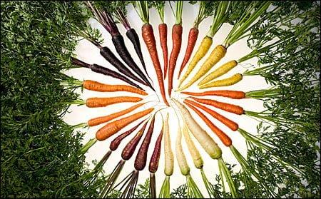 morcovi - Mutanţii din bucătărie (2) 3 - Retetele lui Radu